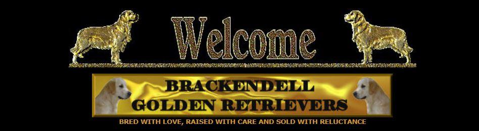 Brackendell Golden Retrievers
